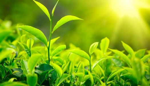 Mosteiro de Tibães promove 'workshop' sobre as plantas da Bíblia