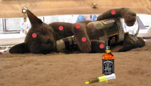 Gata está de quarentena porque não tomou as vacinas