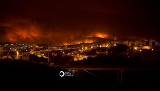 Guimarães e mais sete concelhos minhotos sem plano florestal