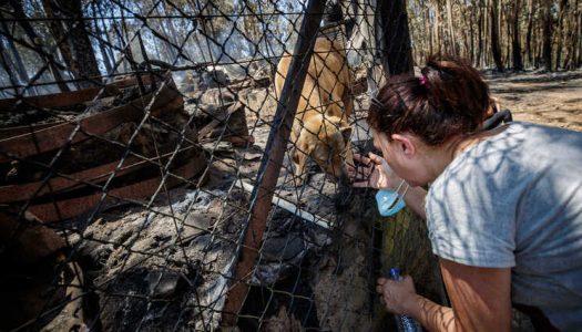 Milhares exigem justiça pelos animais mortos em Santo Tirso através de petição