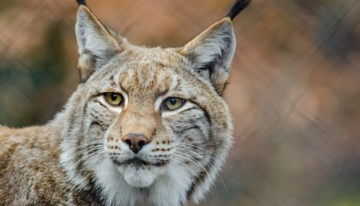 União Europeia precisa de um novo plano para conservar a biodiversidade